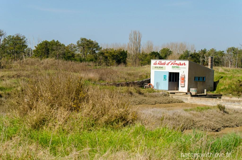 Pointe d'Arçay - Vendée
