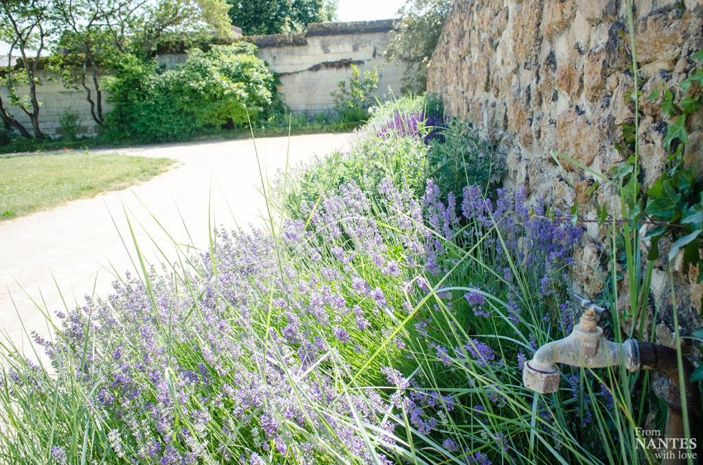 Abbaye Royale de Fontevraud - Jardins