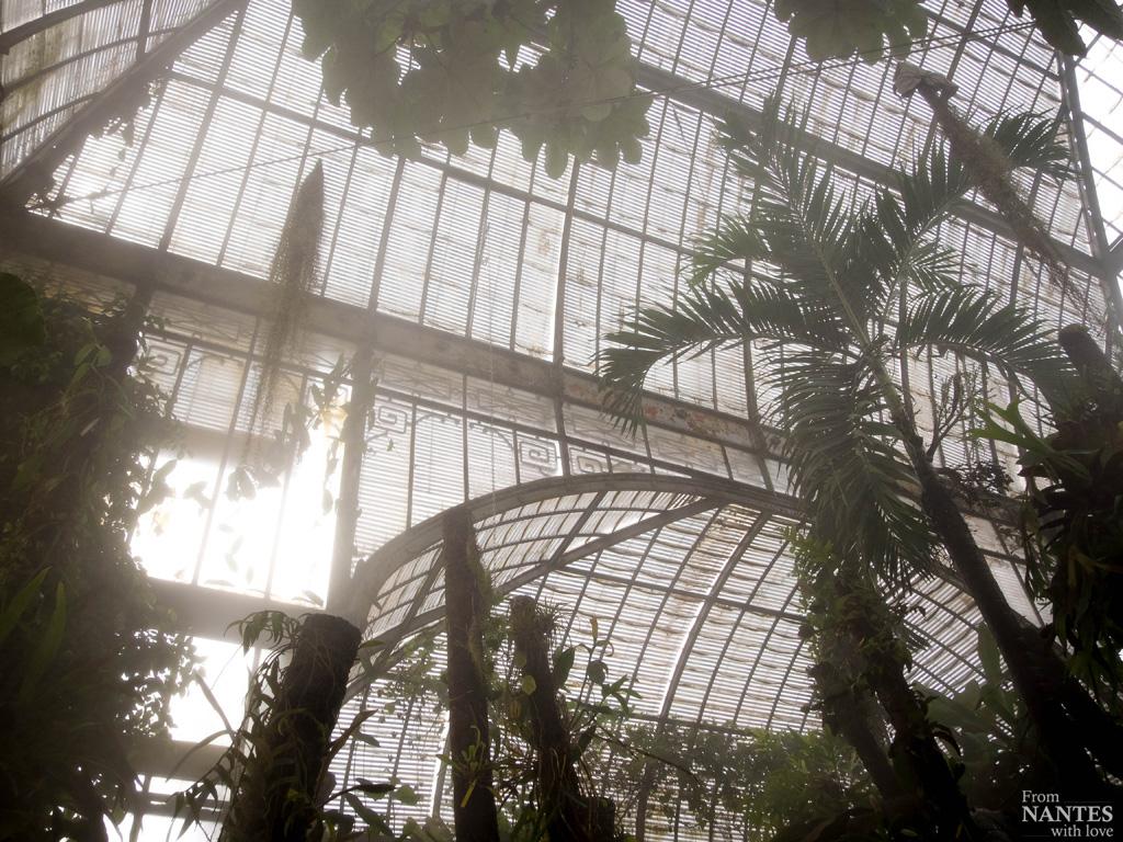 Visite des serres du jardin des plantes de nantes for Jardin des plantes nantes
