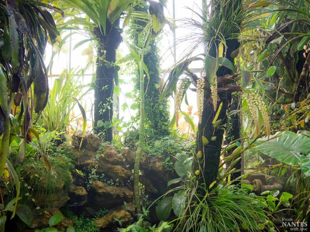 Visite des serres du jardin des plantes de nantes for Jardin aux plantes