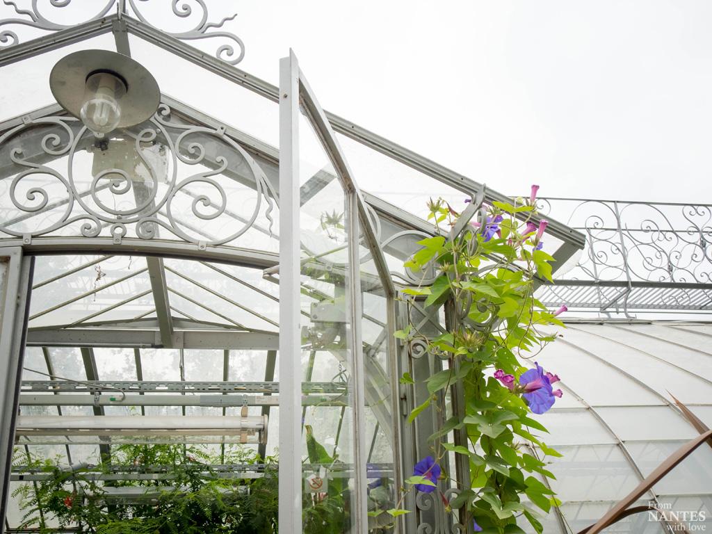 Visite des serres du jardin des plantes de nantes for Swing jardin nantes 2015