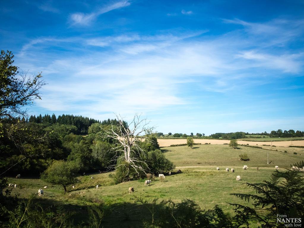 Nature Morvan Bourgogne