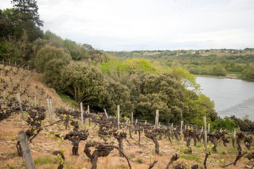 Le domaine viticole des Génaudières