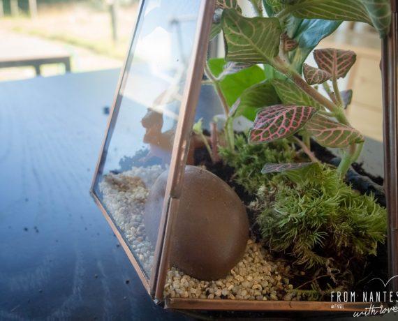 Mon terrarium DIY avec le kit «Green Forest» du Coin Jardin