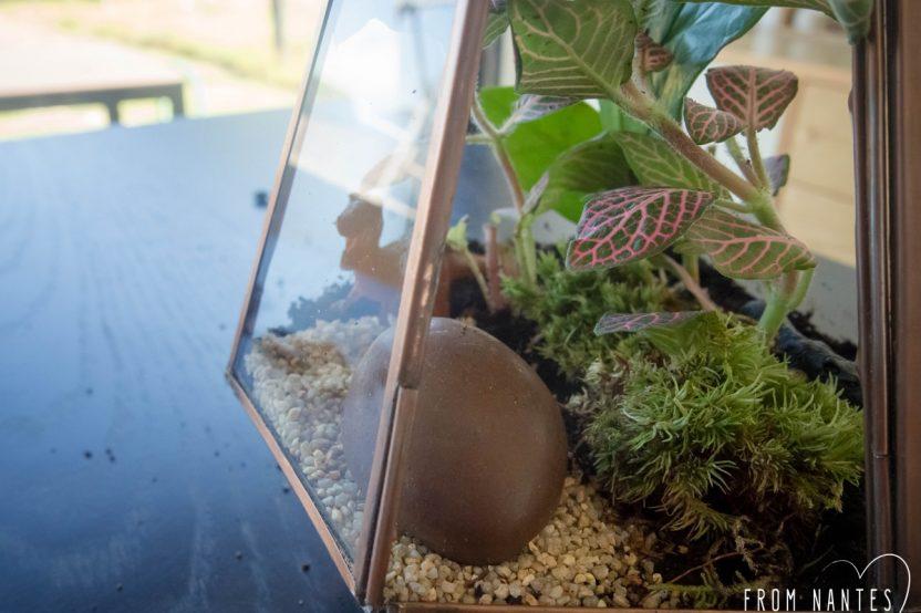 """Mon terrarium DIY avec le kit """"Green Forest"""" du Coin Jardin"""
