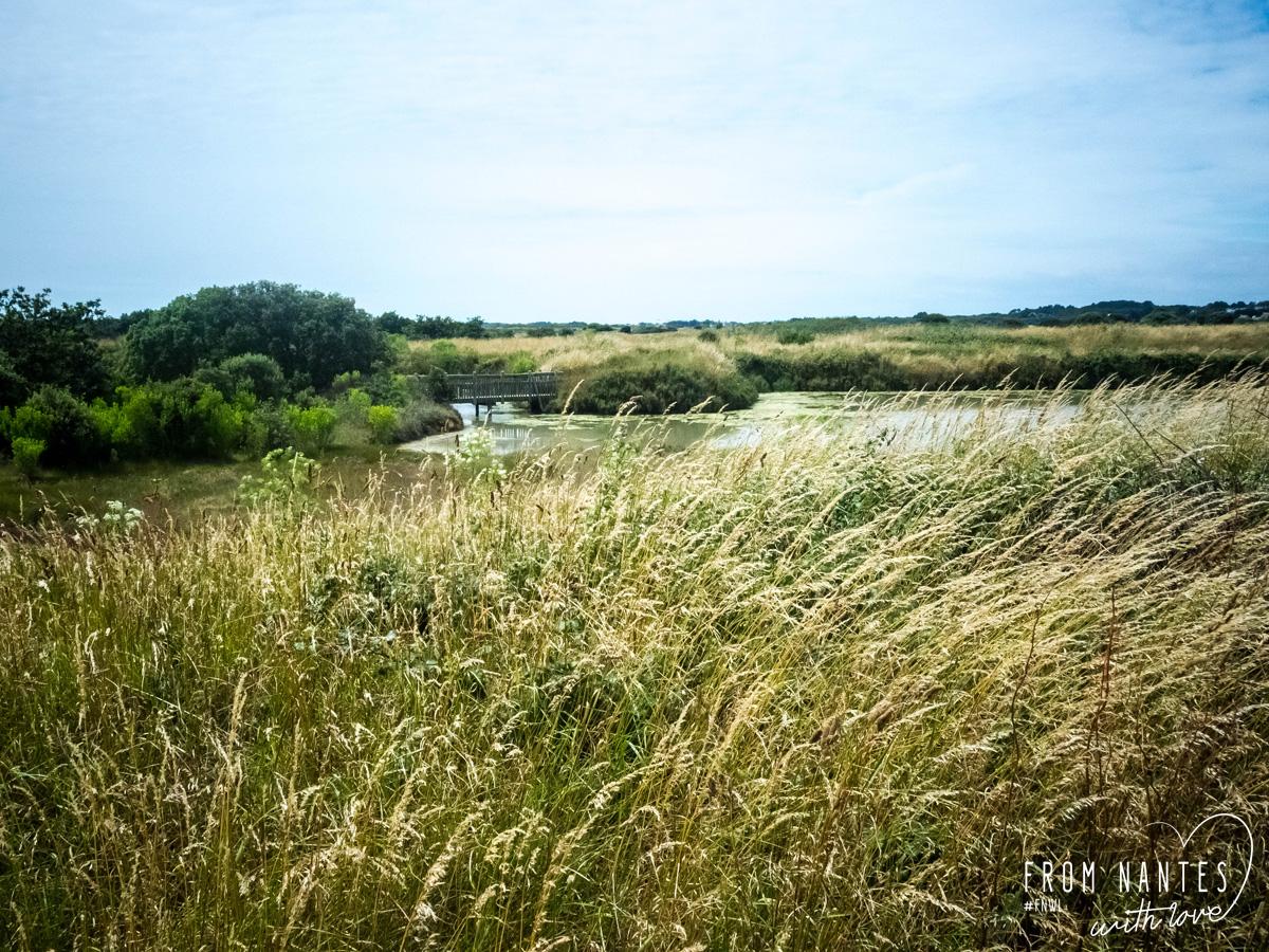Visite des marais salants avec Terre de Sel