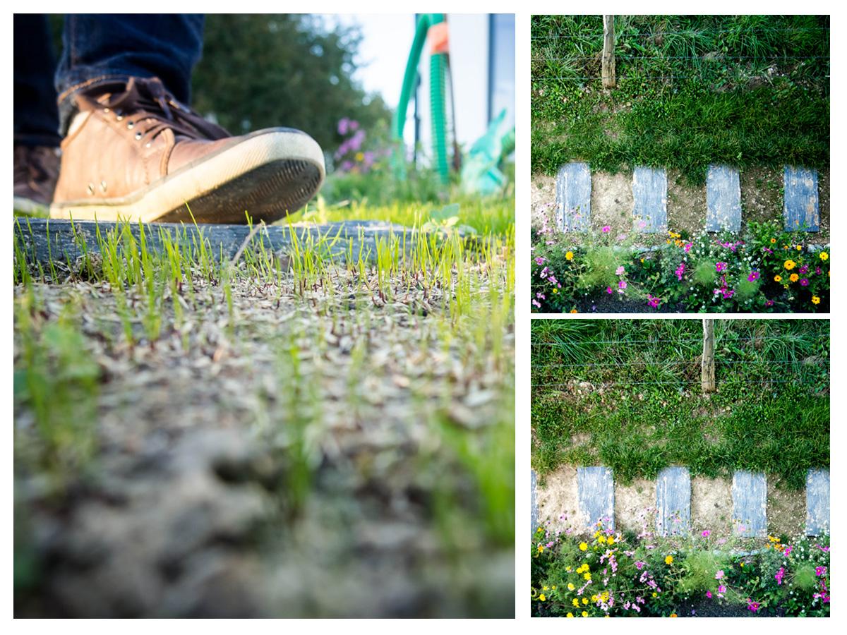 pelouse
