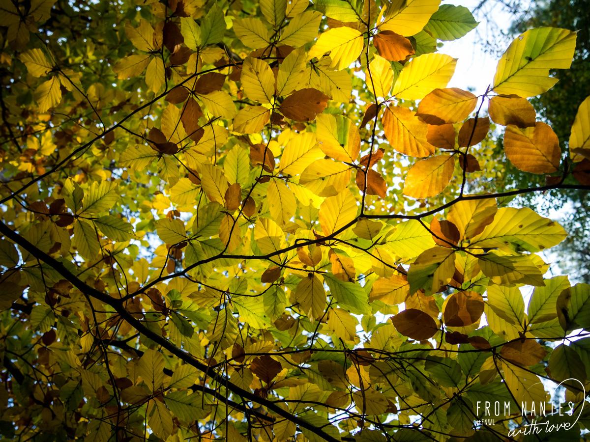 Balade d'automne dans la Forêt du Gavre