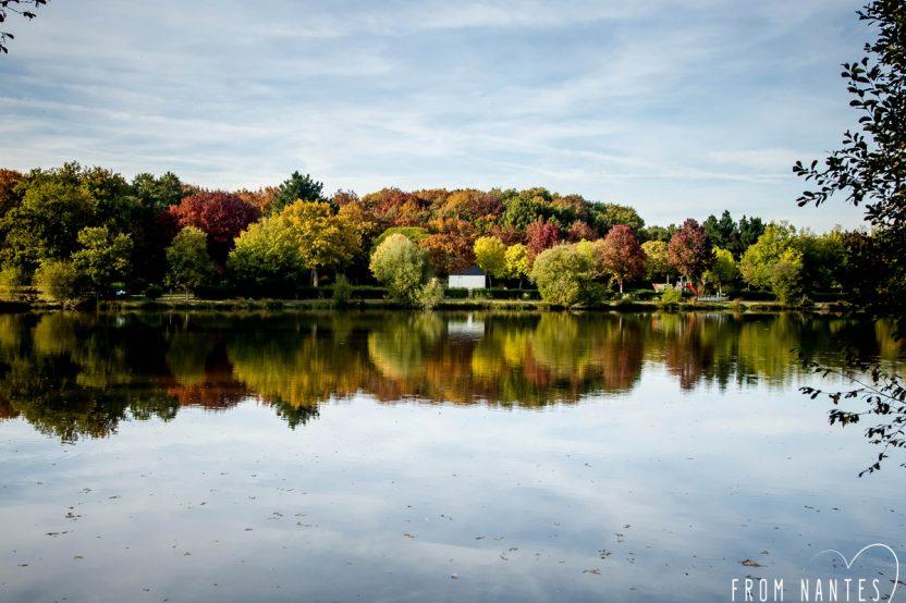 Se promener en forêt l'automne, dans la Forêt du Gâvre