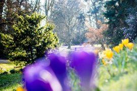 Le Parc de la Gaudinière, promenade printanière au milieu des crocus