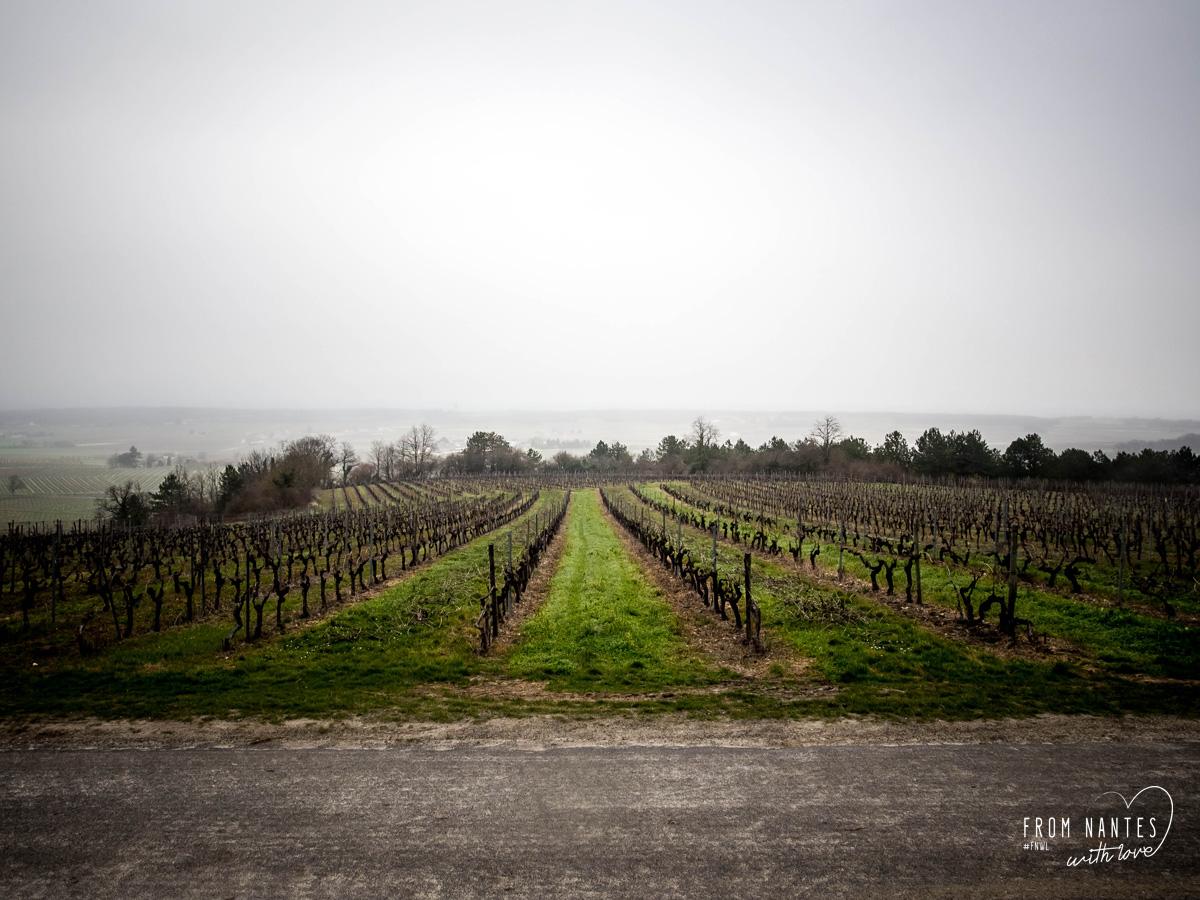 Cognac en balade sur les routes de la Fine Champagne