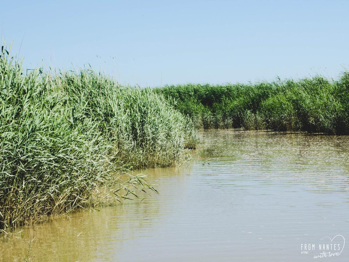 Croisière inédites sur l'Estuaire de la Loire avec Loirestua