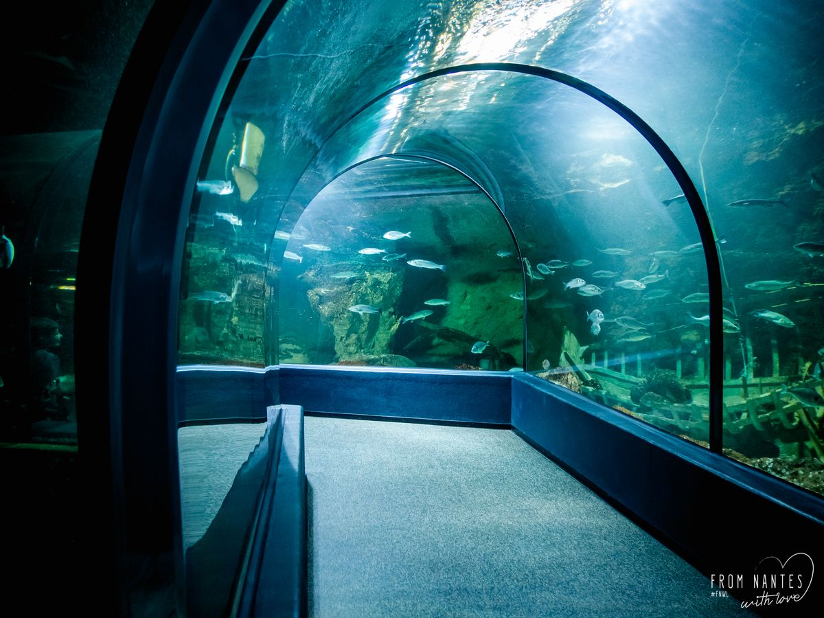 Tunnel sous-marin à l'Ocearium du Croisic