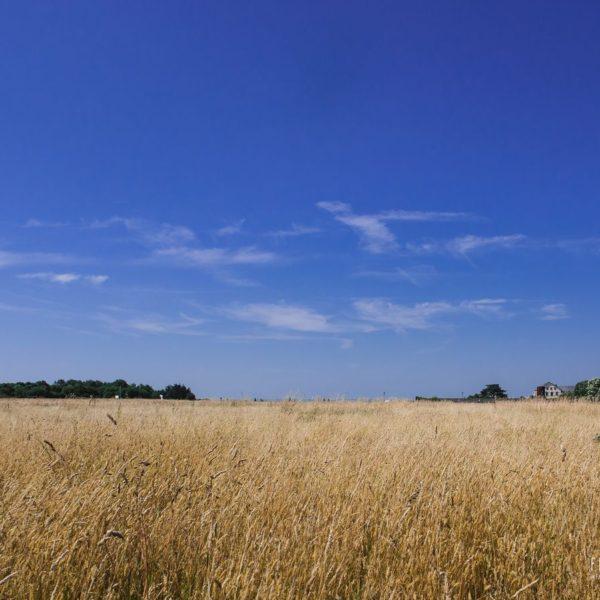 Paysage estival en Loire Atlantique