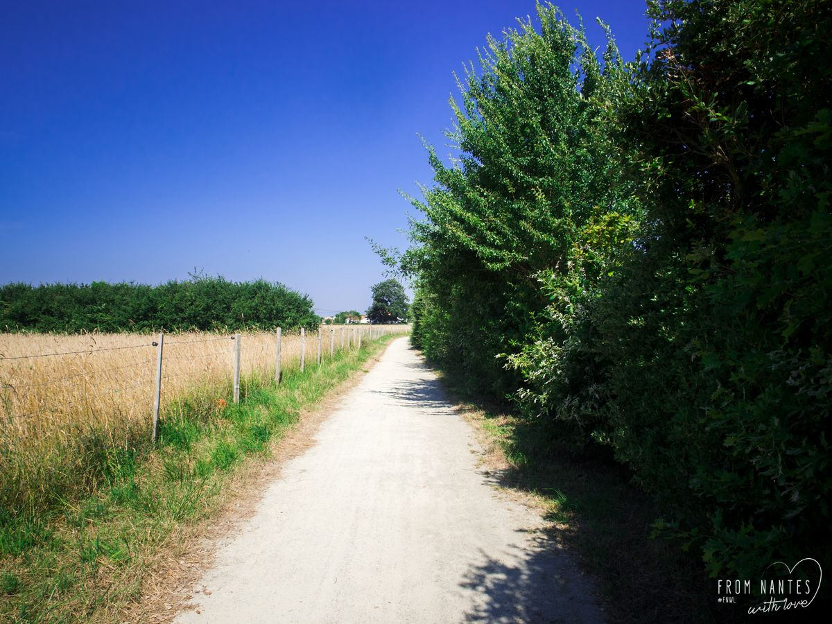 L'un des chemins suivi par la Vélodysée en Loire Atlantique