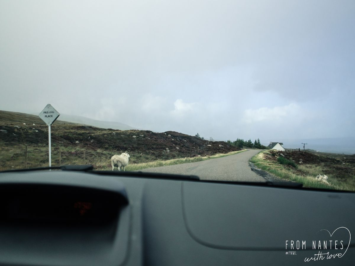 Roadtrip en Ecosse - Single Track Road