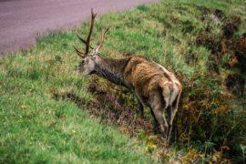 Roadtrip en Écosse, itinéraire complet et bonnes adresses pour 2 semaines dans les Highlands