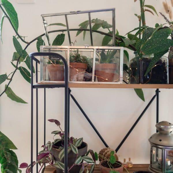 Intérieur - Créer un coin dédié aux plantes vertes chez soi