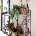 #CrazyPlantLady – Aménager un mini jardin des plantes chez soi