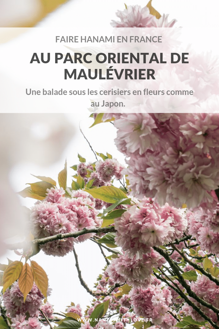 Faire hanami en France - Voyage au Japon depuis le Parc de Maulévrier