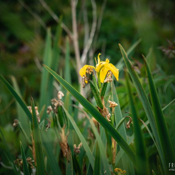 Promenade en brière - Découverte de la faune et de la flore du marais