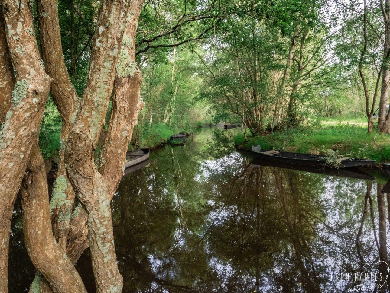 Promenade en Brière - Parenthèse nature