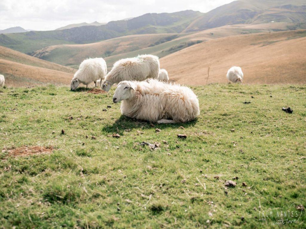 Pays Basque Français hauteurs Pyrénées - Chemin Saint-Jacques Compostelle